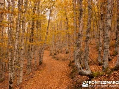 Viaje otoño senderismo, Parque Natural del Hayedo de Tejera Negra; senderismo rascafria